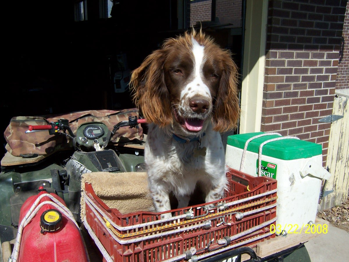 atv dog carrier-101_0754.jpg