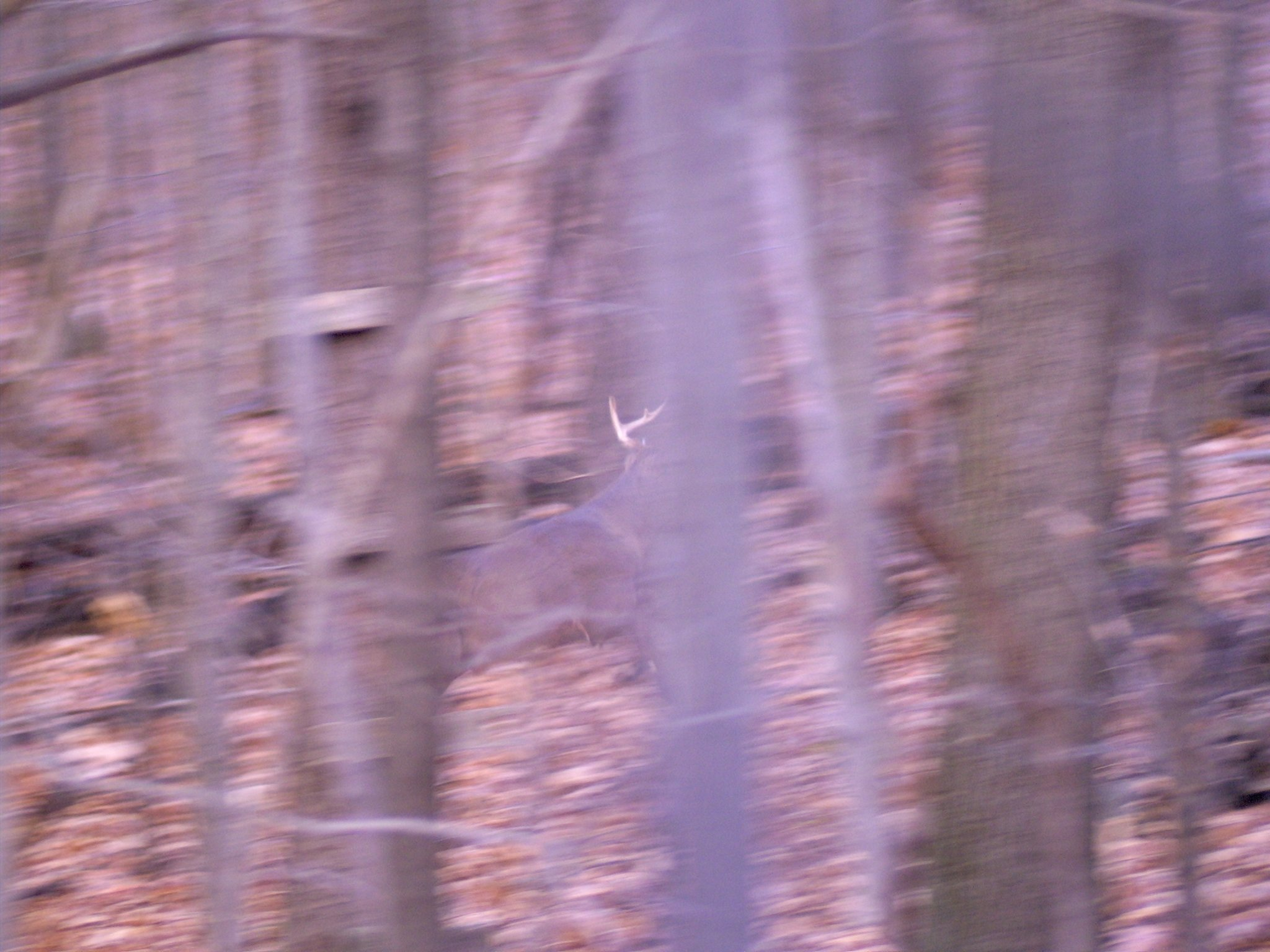 From The Deer Stand / Lets See Pics-bushnell-instant-replay-deer-pic.jpg